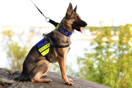 policedog2